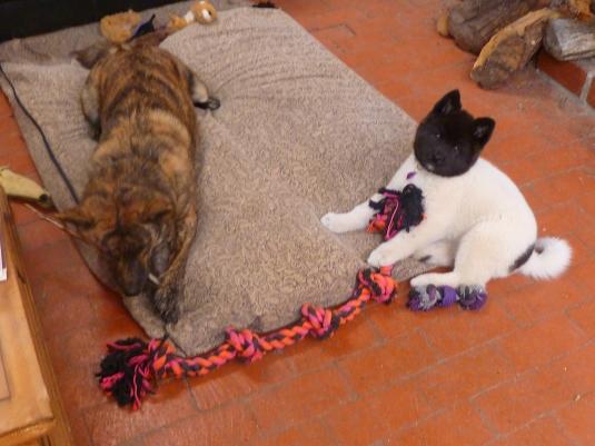 Cô nàng cũng đã bắt đầu tiếp cận được chàng chó vện Leo khó tính.