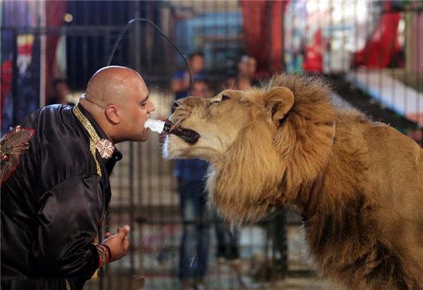 Huấn luyện viênMohamed Sayed Elhelwe người Ai Cập đang trình diễn màn biểu diễn ngoạn mục,dùng sư tử nhét dao vào miệng mình. Chiếc dao từ từ đi vào trong miệng Mohamed cho đến khi mắt của anh kề sát với hàm răng sắc nhọn của con sư tử.