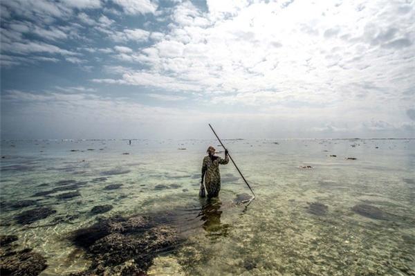 Zanzibar hiện là một thị trường béo bở cho việc kinh doanh món đặc sản này.