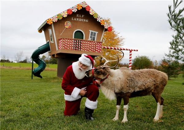 """Tom Valent tạo điều kiện để các Santa tương lai tới làm quen với tuần lộc tại các nông trại. Nhờ đó, họ sẽ không cảm thấy gượng gạo nếu như phải """"hợp tác"""" với tuần lộc thật tại các sự kiện ở trung tâm thương mại."""