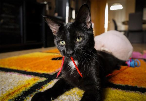 Bé mèo đen tội nghiệp này cũng từng suýt bị mất đuôi do các vết xước bị nhiễm trùng mà dao cạo gây ra.