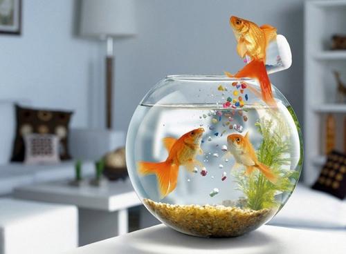 Nuôi một cặp cá, đặt bể theo đào hoa vị để sớm gặp người tình trong mộng.(Ảnh minh họa, nguồn: Internet)