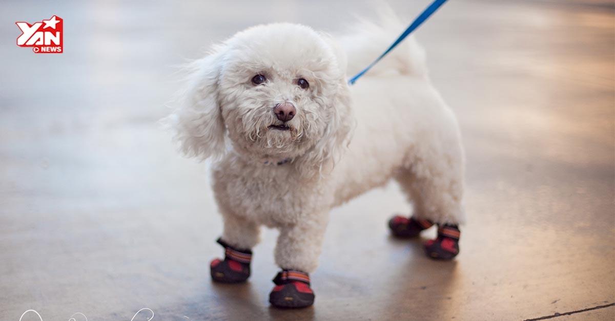 Hài hước phản ứng của những chú chó lần đầu tiên đi giày