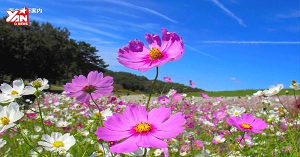 Ngỡ ngàng với phong cảnh mùa thu đẹp nhất thế giới tại Nhật