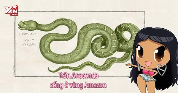 Hài hước với MV Anaconda phiên bản... nghiêm túc