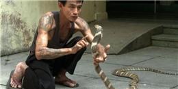 Hổ mang chúa khổng lồ bị dân khâu miệng giờ ra sao