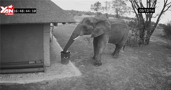 Bất ngờ với chú voi giúp người nhặt rác