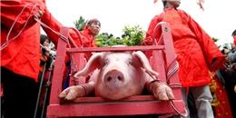 'Đòi bỏ tục chém lợn thể hiện tâm lý tự ti, mặc cảm'