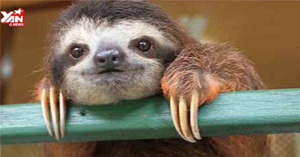 Phì cười với chú lười làm biếng quá mức trong khi ăn