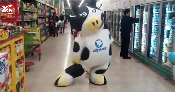 Phì cười với chú bò sữa nhảy nhót cực sành điệu