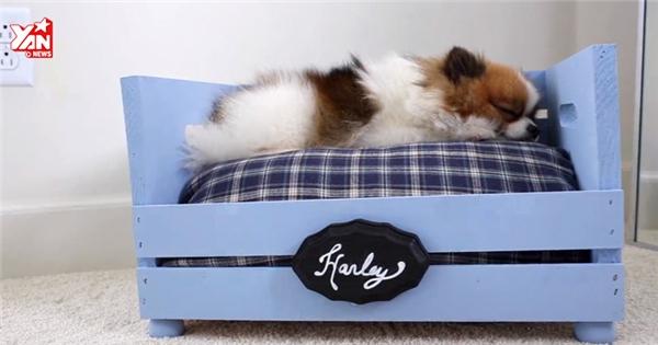"""Độc đáo cách làm giường cho các thú cưng """"mi nhon"""""""
