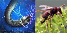 """Độc đáo với những động vật có thể phát ra nguồn điện """"chết người"""""""