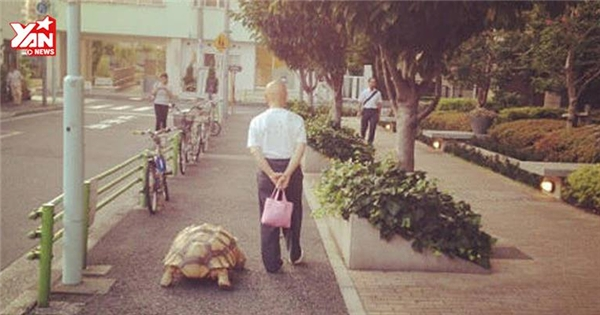 Thích thú với cụ ông dắt rùa đi dạo mỗi ngày
