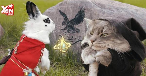 """Cư dân mạng """"rung rinh"""" với phim ngắn về thỏ trắng cực dễ thương"""