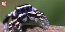 Xuất hiện loài nhện đáng yêu nhất quả đất