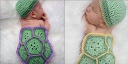 Loạt khoảnh khắc 'rùa con ngủ bình yên' sẽ khiến bạn phải xiêu lòng