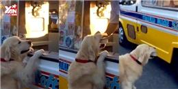 Chó tự đi mua kem đốn tin cư dân mạng