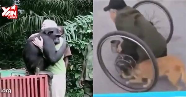 Những khoảnh khắc xúc động giữa con người và động vật