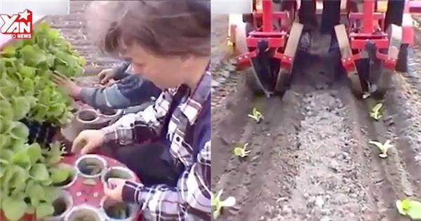 """""""Choáng"""" với công nghệ trồng và thu hoạch của nước ngoài"""