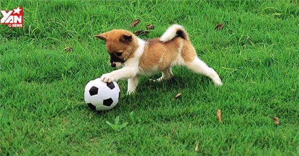 """Những trò vui nhộn của thú cưng khiến bạn cười """"ngất"""""""