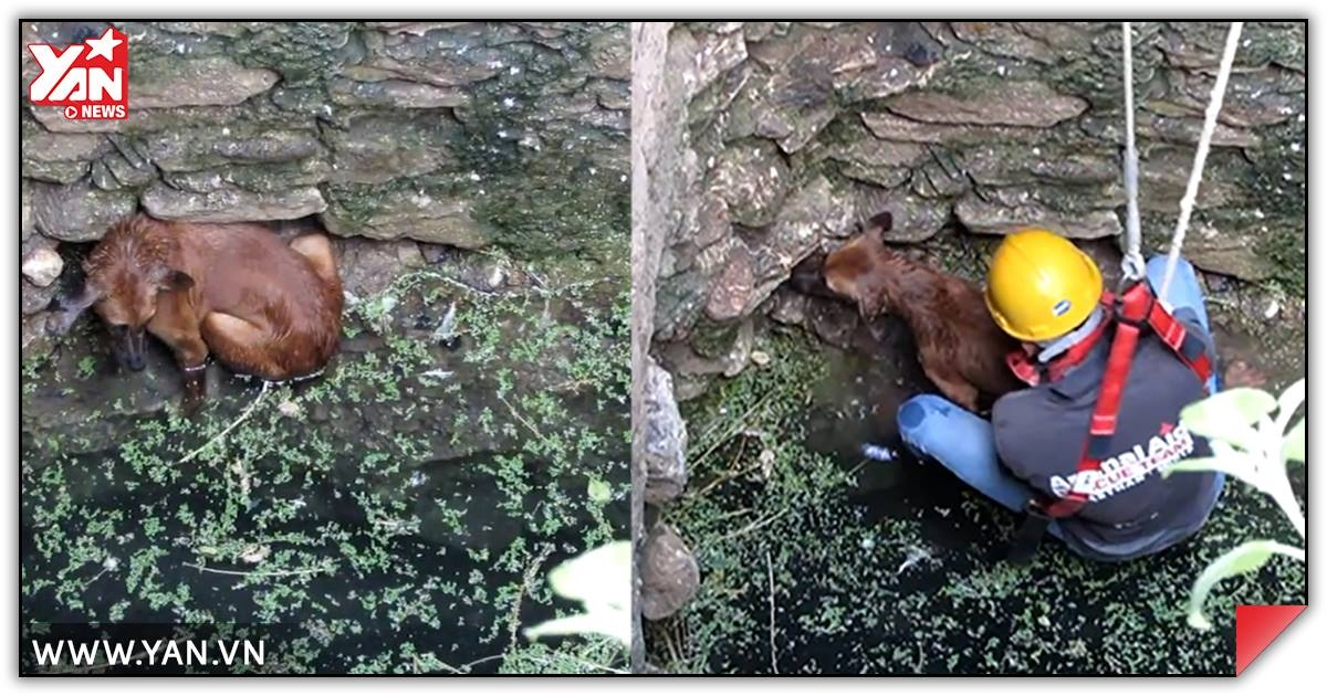 Cảm động cuộc giải cứu chú chó rơi dưới đáy giếng