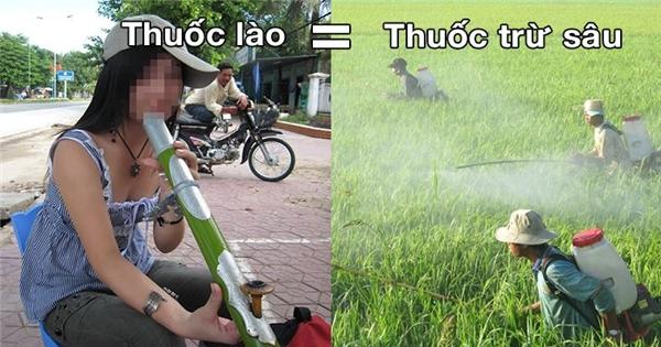 Ăn trầu, hút thuốc lào độc ngang thuốc trừ sâu