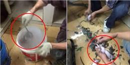 Cảnh giết chuột chế biến món ăn dã man khiến nhiều người kinh hãi