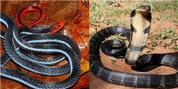 Bí ẩn bầy rắn độc canh kho giữ tiền người dân không dám đến gần