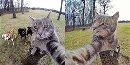'Ngất' với độ đáng yêu của chú mèo 'sống ảo' nhất thế giới