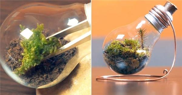 Quá lạ với cách chế tạo cả vườn cây trong bóng đèn