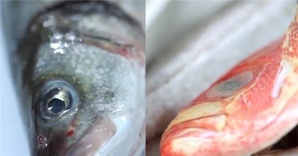 Cách phân biệt cá tươi và cá ươn