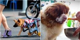 Cô gái cưu mang 50 con chó, mèo khuyết tật, ung thư