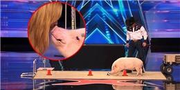 Cận cảnh chú lợn thông minh được siêu mẫu thế giới... 'khóa môi'