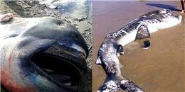Bắt được cá mập miệng rộng khổng lồ cực hiếm ở Nhật Bản