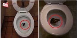 Đây là cách một con chuột dễ dàng chui lên từ lỗ cống nhà bạn