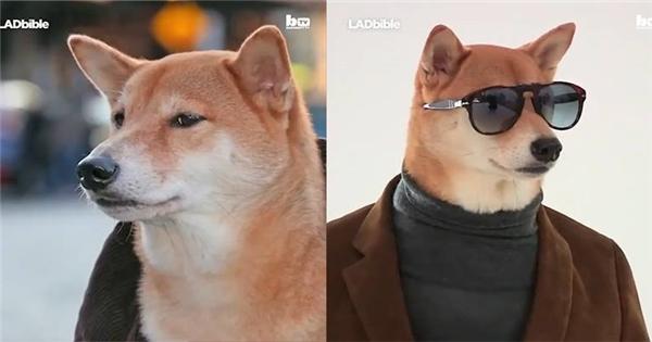 """Siêu mẫu chó """"chuẩn men"""" tấn công làng mẫu"""