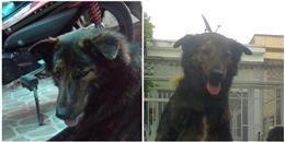 Tranh cãi việc chủ ướp xác chó cưng trong tủ đông vì không nỡ xa cách