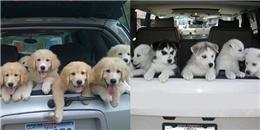 Nếu một ngày, những chiếc xe chở đầy cún con dừng trước nhà bạn