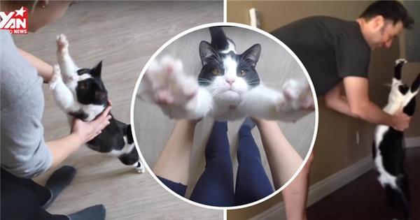 """Chú mèo """"cuồng ôm"""" nhất thế giới chính là đây"""