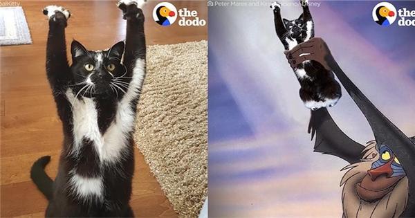 Hài hước với chú mèo đi hai chân giơ hai tay