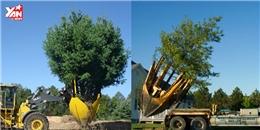 Cỗ máy này chính là 'cứu tinh' của hàng triệu cây xanh trên thế giới