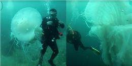 Bắt gặp sứa khổng lồ to hơn người trưởng thành ở Mexico