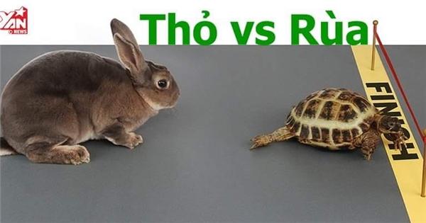 Cuộc đua rùa và thỏ: Liệu kết quả có như truyện ngụ ngôn?