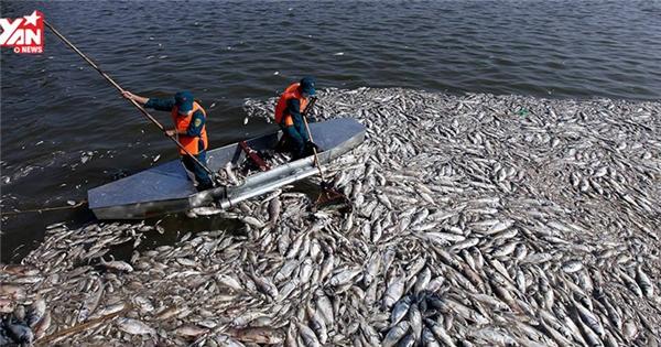 Toàn cảnh vụ cá chết tại Hồ Tây gân xôn xao dư luận cả nước