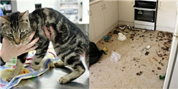 Kinh hoàng với cảnh tượng 14 con mèo tàn sát lẫn nhau để sinh tồn