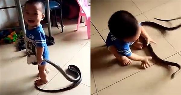 Rùng mình với đoạn clip bé trai chơi đùa vô tư với rắn