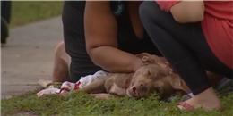 Rơi nước mắt với hành động của chú chó khi nhìn thấy chủ gặp nạn