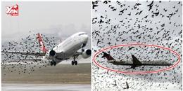 New York tàn sát hết chim chóc để dọn đường cho máy bay
