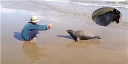 Xót xa hình ảnh hải cẩu chơi đùa với người dân trước khi bị đánh chết